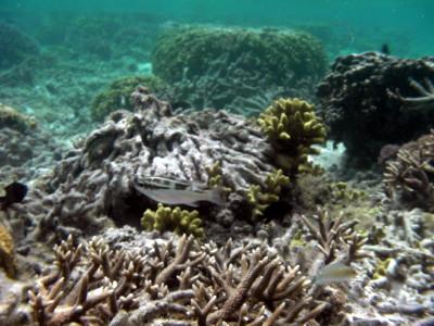 海中から撮影した魚3