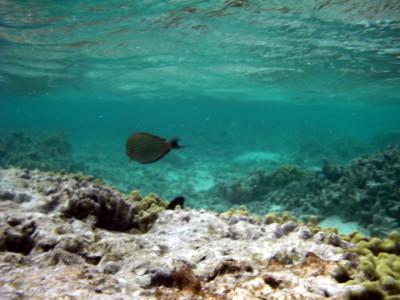 海中から撮影した魚4