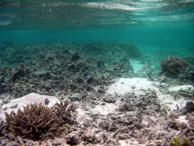 海中から撮影した魚たち1