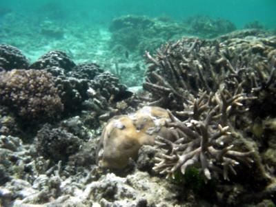 サンゴ礁群
