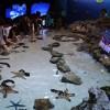 ちゅら海水族館に大満足
